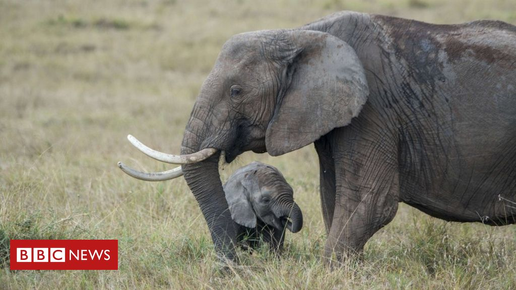 RT @BBCAfrica: Zoo trade in baby elephants banned internationally https://t.co/NlGrdRlJzh https://t.co/Djg6PJ1pOl