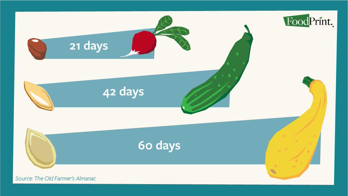 Just because its the end of August doesnt mean you cant grow your own vegetables. Start radishes today & youll have them by mid-September. Get more tips for growing your vegetables here: ow.ly/f7Rh50vCueF