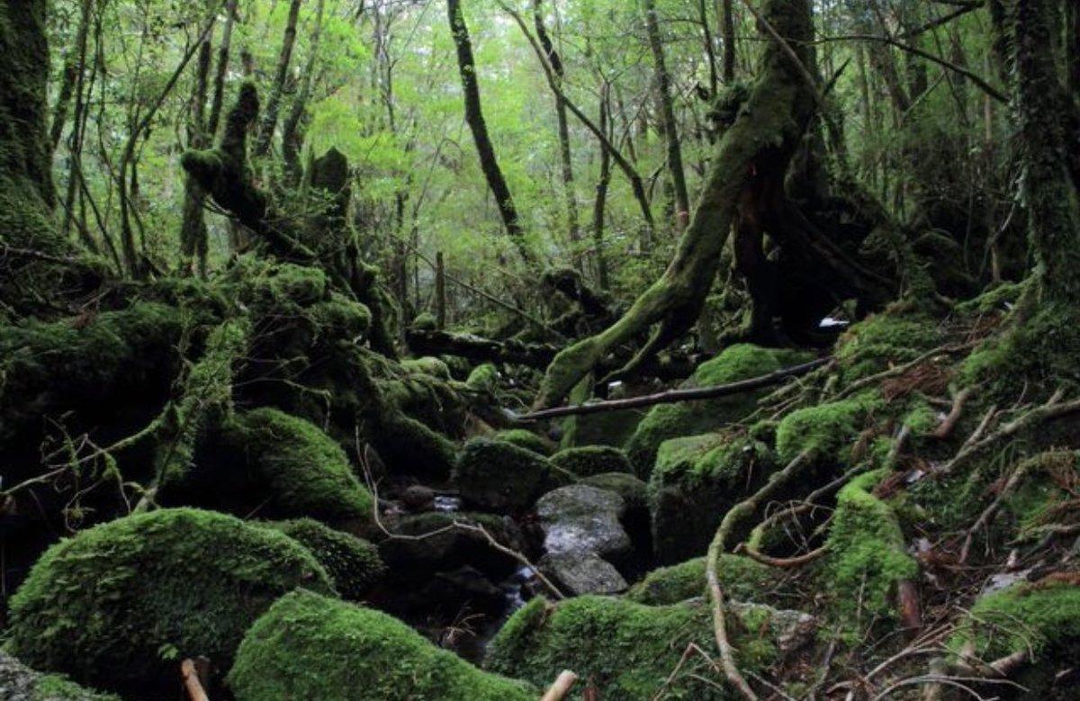 もののけ姫の舞台となった鹿児島県の屋久島にまじで行ってみたい