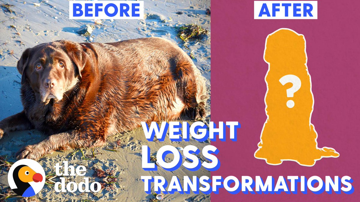 Huge dogs who lost ALL the weight 😵