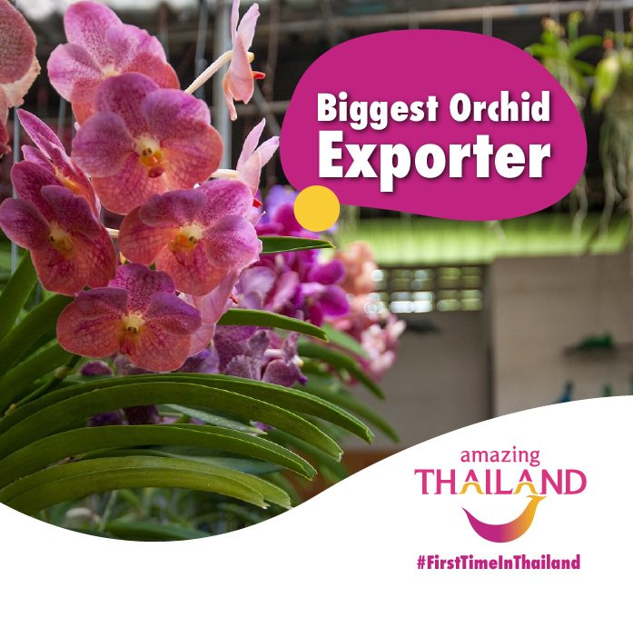 #FirstTimeInThailand Did you know Thailand is the world's number 1 orchid exporter. #amazingthailandsouthafrica #thailand #orchids #orchidaceae #orchidsharepic.twitter.com/7nT533sbGL