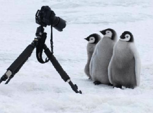 ペンギンちゃんの警戒心のなさは異常 https://t.co/Mup6qupvLy