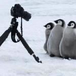 ペンギンは警戒心がなさすぎる!?カメラマンに近づいてくるのがかわいい!
