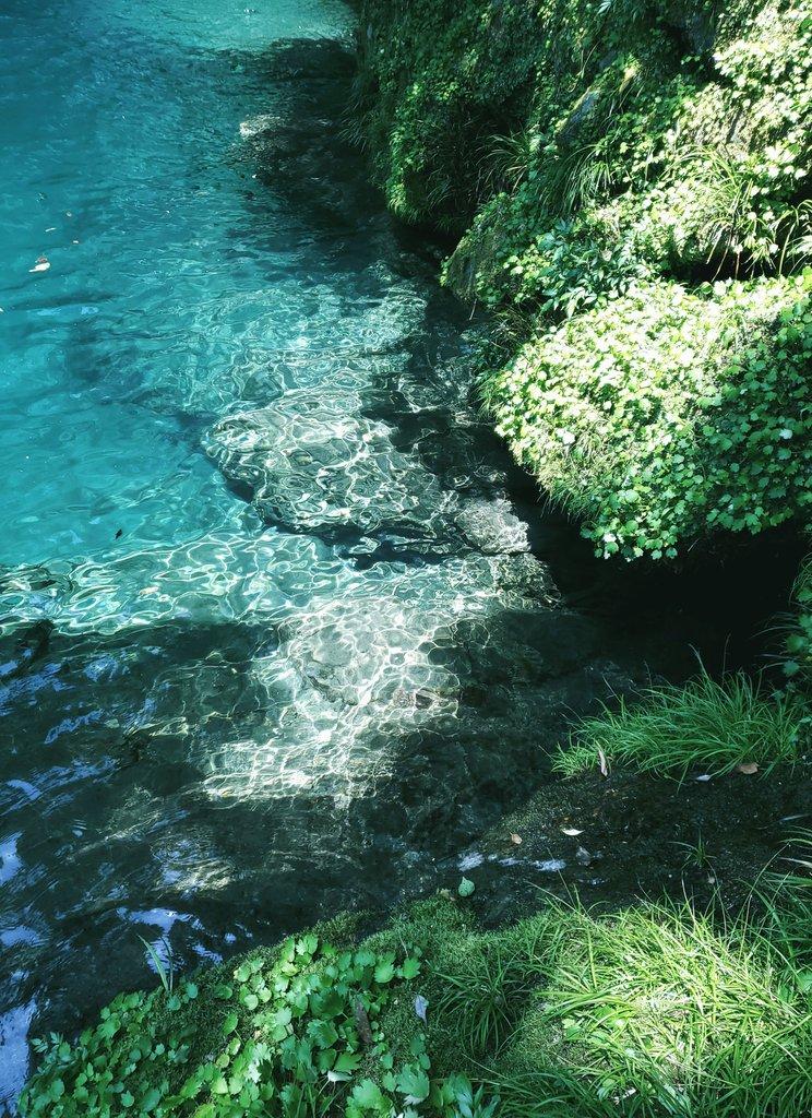 高知県の川が綺麗すぎて何度行っても感動してしまう。