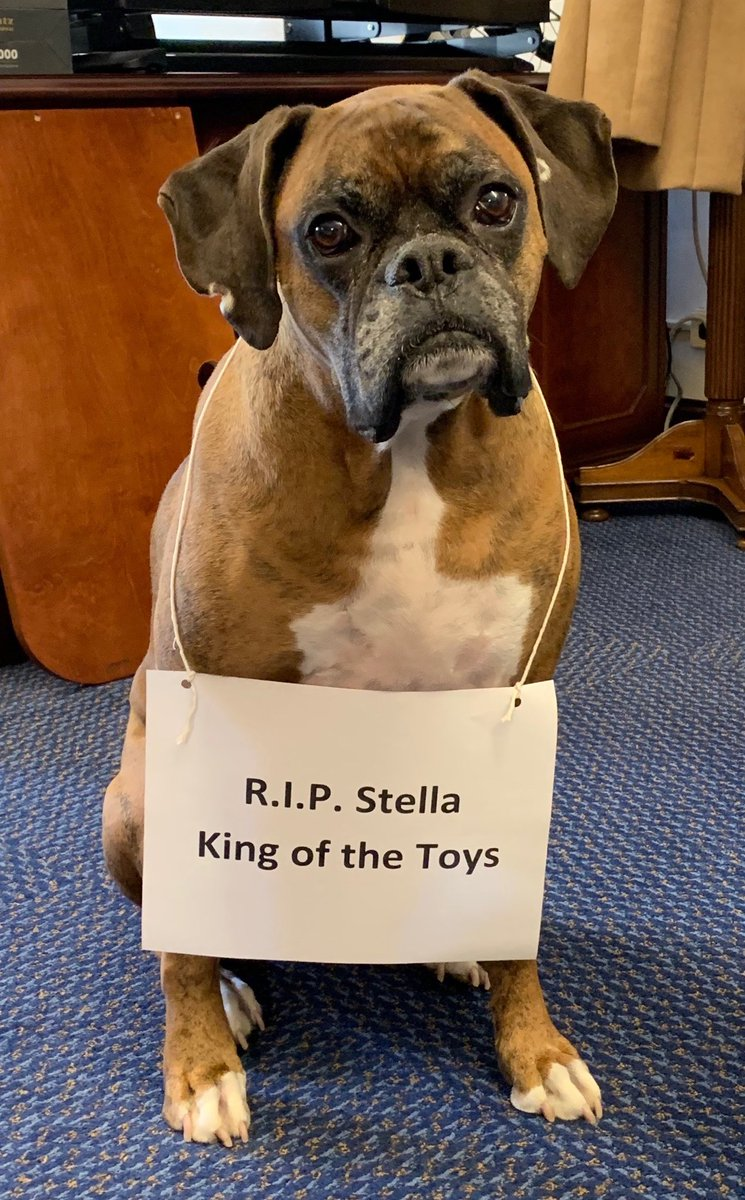Hank and our entire office were saddened to hear of Stella's passing @stoolpresidente @barstoolsports