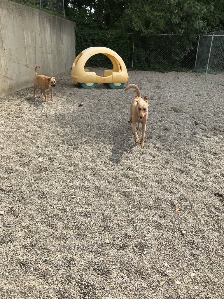Leeloo and Zoe have fun together!