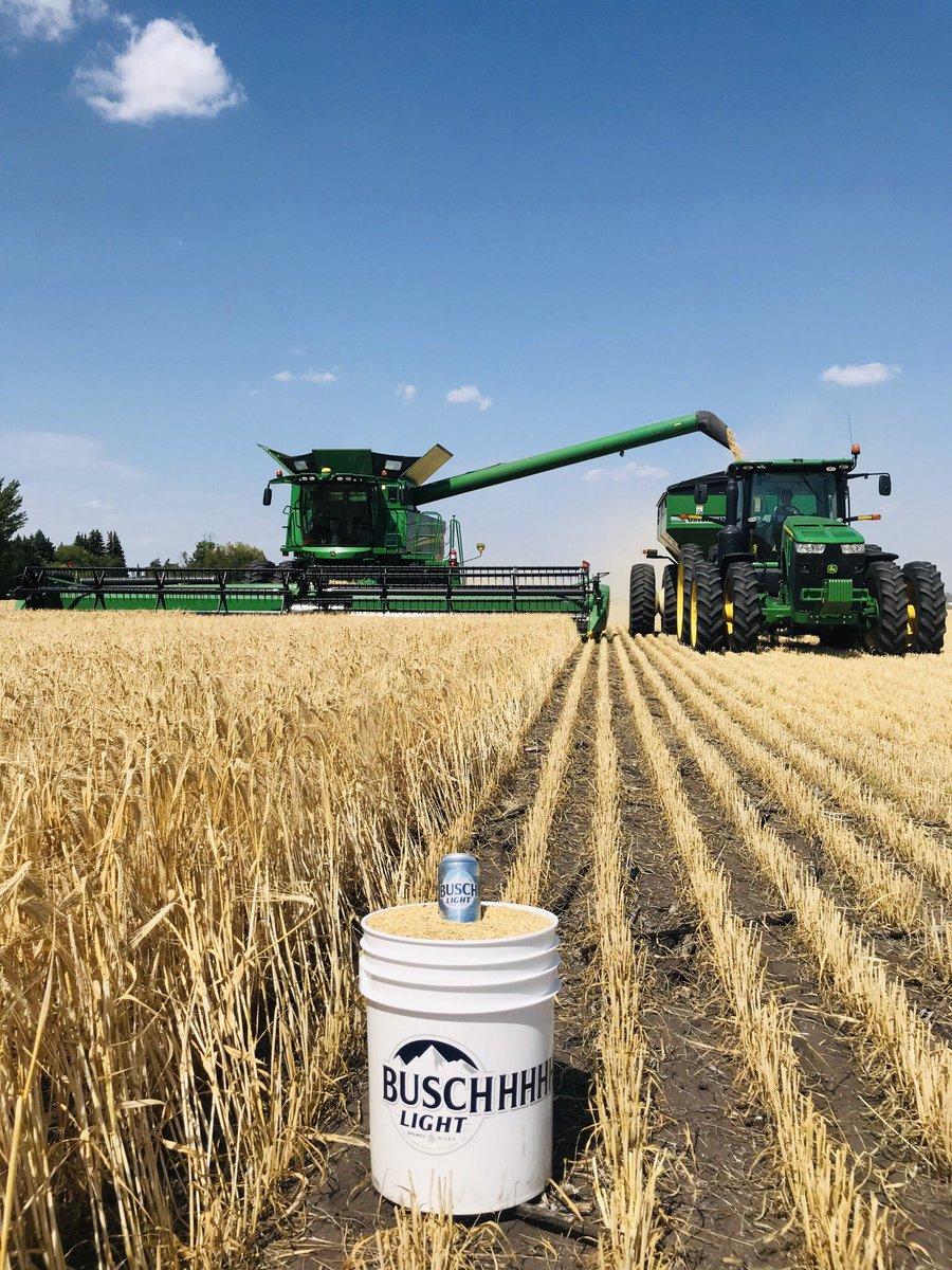 Buschhhh barley harvest! @BuschBeer #harvest19 #NoBarleyNoBeer<br>http://pic.twitter.com/EngQdhDyHJ