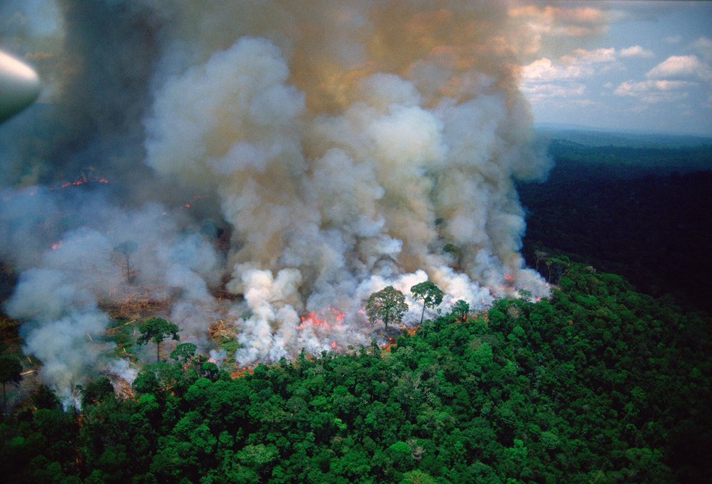 The Amazon Rainforest: • Creates 20% of the air we breath • Has 40% of the world's tropical forests • Holds 20% of the worlds fresh water supply & it's been burning for the past 3 weeks Its not enough to only #PrayforAmazonia We must act now & fight #ClimateChange