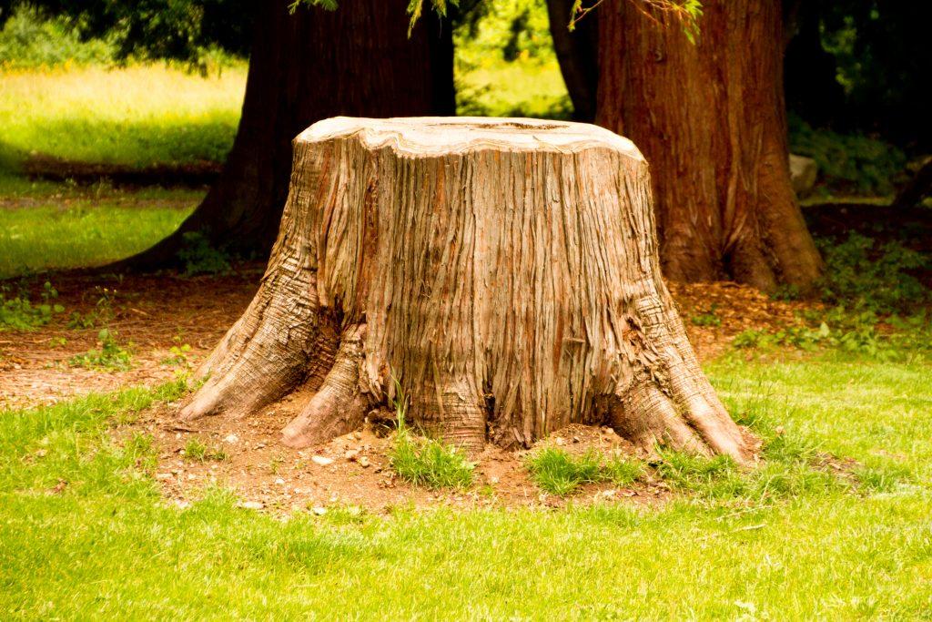 картинка деревья пенечки постарались сохранить дружеские