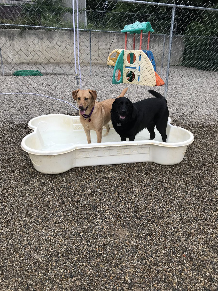 Clary and Greta enjoy the pool!