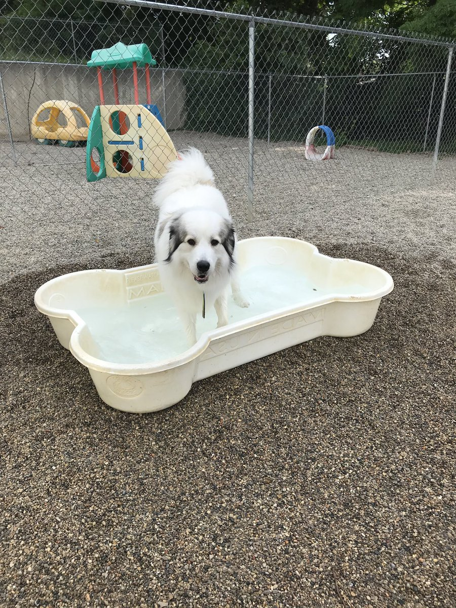 Gerdi takes a dip in the pool!