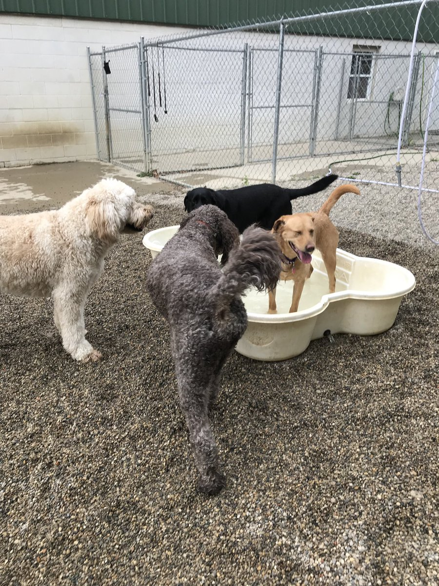 Riley, Tucker, Greta, and Clary enjoy some pool time!