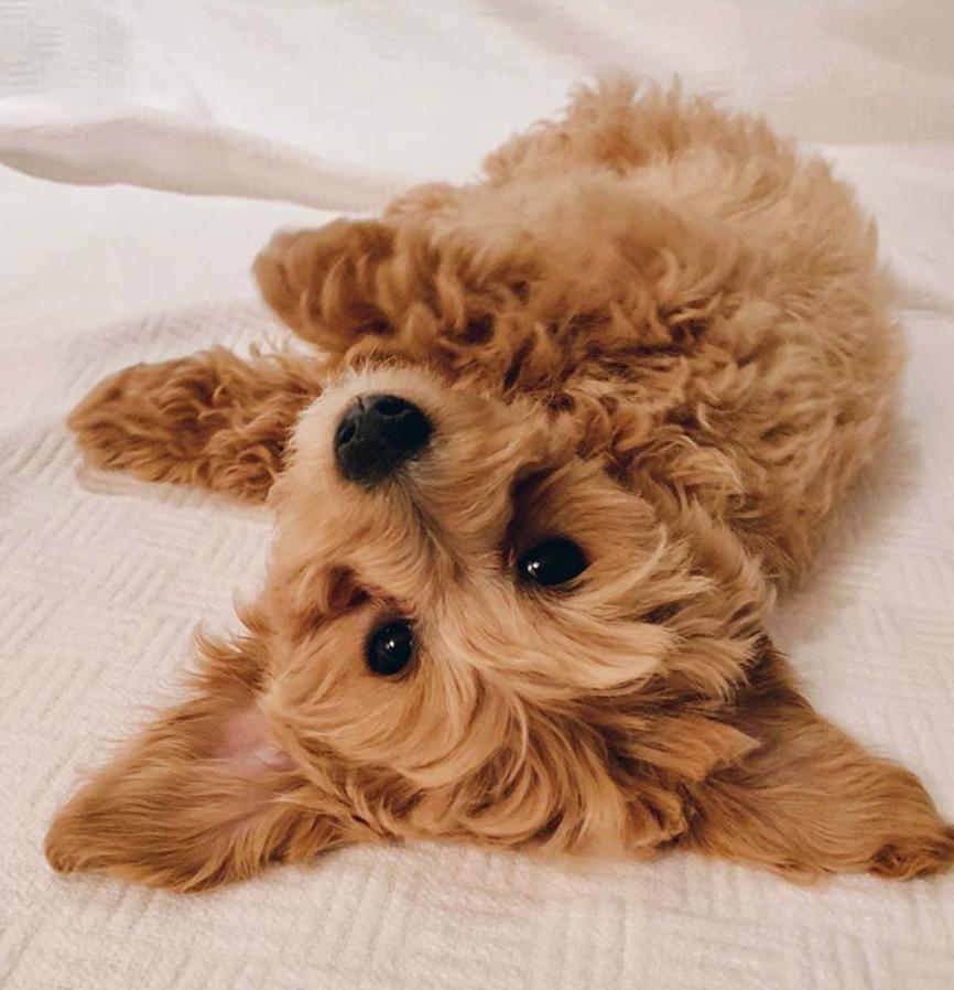 I'm so cute, I can do it upside down.