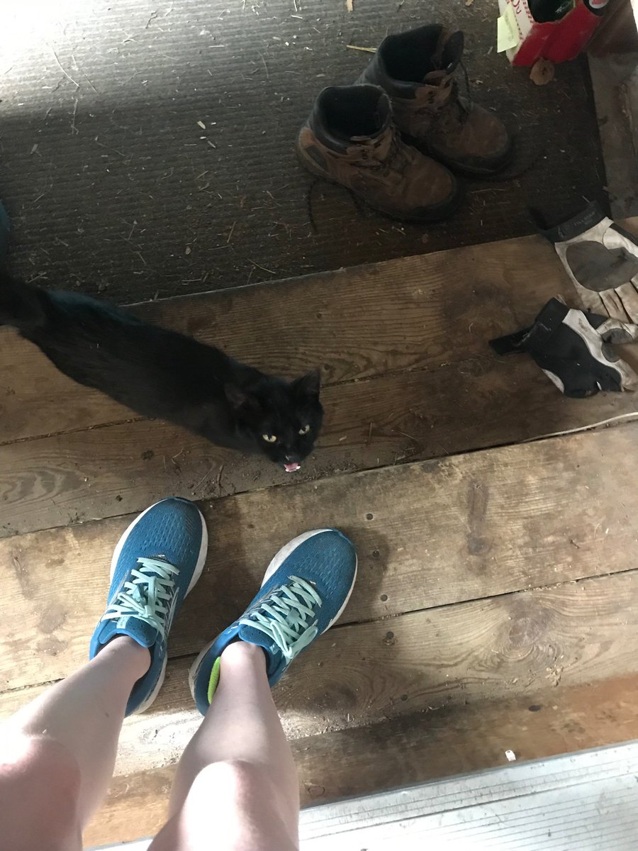 This farm kitty that lives on my stepdad's farm loves following me around while I'm here & nuzzles my legs. I think he likes me, he even waited outside my car when I was about to leave for me to get out...so precious!