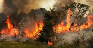 The lungs of our planet are burning, bringing life on Earth down with them. This is driven by people placing money over morality and economy over ecology. In the end, no will benefit when our life support systems are destroyed. SHARE WIDELY. #PrayforAmazonia