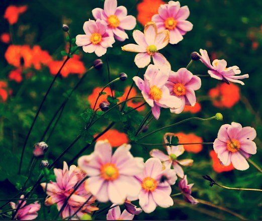 .•° ✿ °•.     Beauty              blooms                 from                      within                 .•° ✿ °•.     #Wednesdaythoughts #HappyWednesday<br>http://pic.twitter.com/UKXU1Gupxo