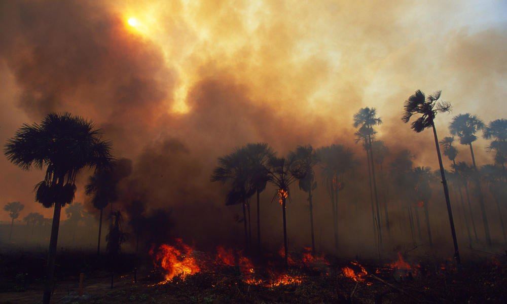 The lungs of our planet are burning, bringing life on Earth down with them. This is driven by people placing money over morality and economy over ecology. In the end, no will benefit when our life support systems are destroyed. SHARE WIDELY. #PrayforAmazonia<br>http://pic.twitter.com/J0blsbtD8W