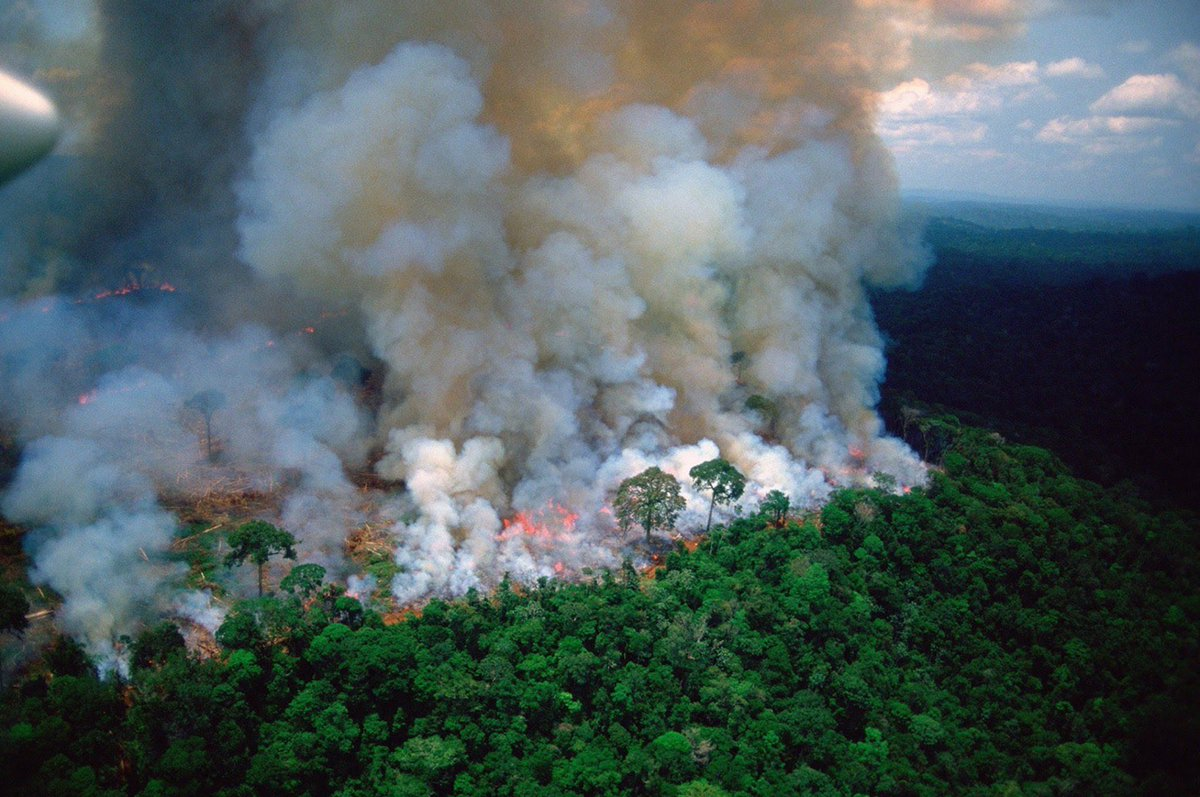 When Notre Dame was burning, the worlds media covered every moment of it and billionaires rushed to restore it. Right now the Amazon is burning, the lungs of our planet. It has been burning for 3 weeks now. No media coverage. No billionaires. #PrayforAmazonia