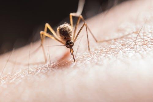 https://www.healthfity.com/malaria-symptoms/  … #HealthTips  #health  #healthcare  #HealthyLiving  #health  #fitness  #FitnessGoals  #mosquito  #malaria  #dengue