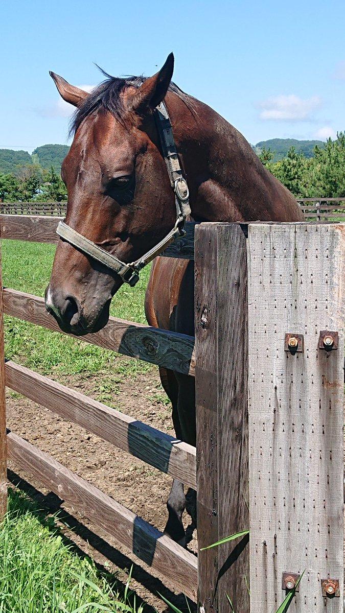 インカンテーションさん  先程更新したオリジナルスピンの孝行息子です。  種牡馬入り、おめでとう❗  #牧場見学 #インカンテーション #競馬