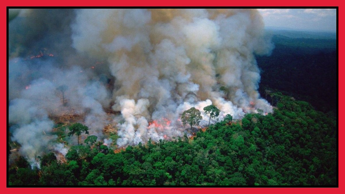 Remember your sadness when the Notre Dame in Paris was on fire?  Now the #Amazon has been on fire for weeks.  Where is the media attention?  Where is the outrage?  And where is your sadness?  Please RT to raise more attention.  #AmazonFire #climatechange #Brazil #biodiversity<br>http://pic.twitter.com/QhExibDoUp
