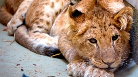 AAP Animal Advocacy (@AAP_Advocacy) | Twitter