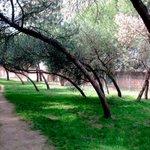 Image for the Tweet beginning: El Ayuntamiento acondiciona el parque