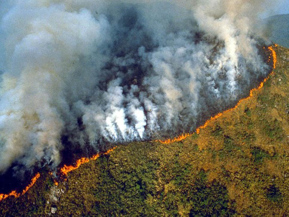 The Amazon is rapidly burning to the ground.   Siberia is rapidly burning to the ground.   The Canary Islands, Alaska, and Greenland are also on fire. That's both tropical and polar ecosystems. <br>http://pic.twitter.com/g6MqkXXp8T