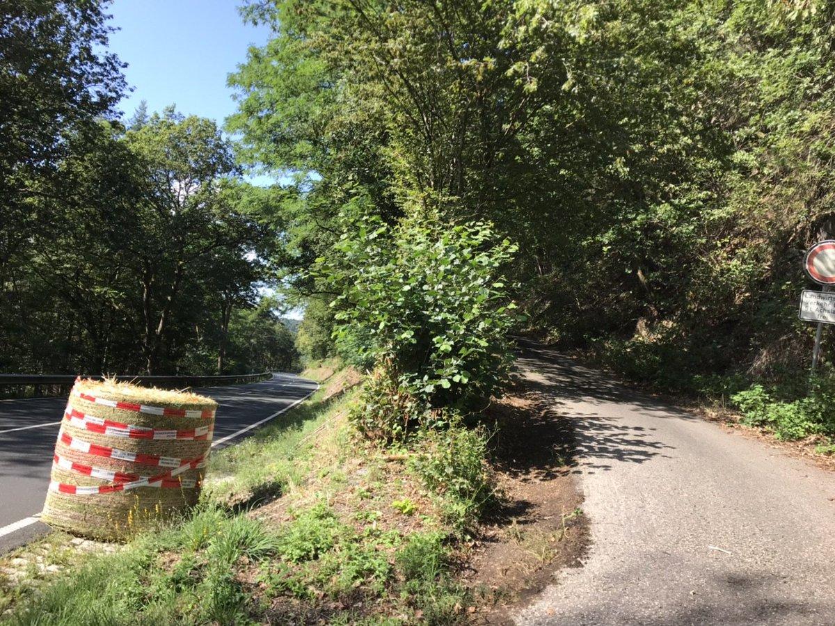 WRC: ADAC Rallye Deutschland [22-25 Agosto] - Página 2 ECfB-OsVUAEh1Hi