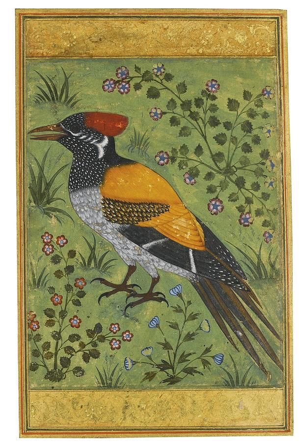 Mughal Painting of a Yellow Backed Woodpecker. 1500'S or there about. Such clarity and beauty.