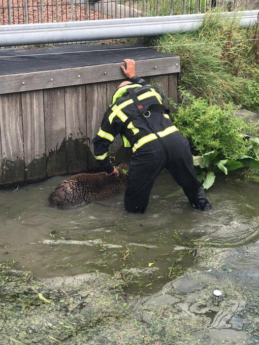 RT @M_Naaktgeboren: Toppers die brandweermannen uit Honselersdijk! @VRH_Haaglanden #westland #schaap https://t.co/GoEAeTkMY9