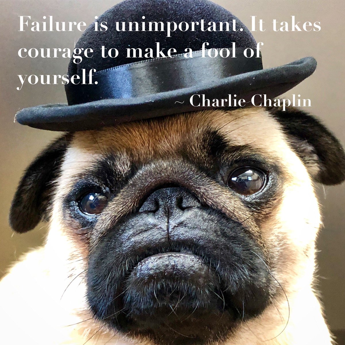 Always be able to laugh at yourself    #wisdomWednesday   #pug #puglife #charliechaplin #wisdom<br>http://pic.twitter.com/x6NebrrAWo