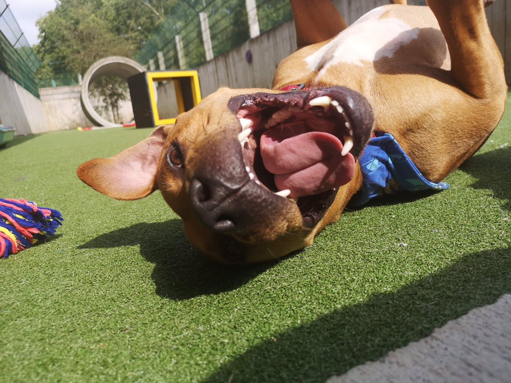 Caption this..... Scooby @DogsTrust #Ilfracombe #adoptdontshop #adogisforlife #lovedogs 💕🐶🐾