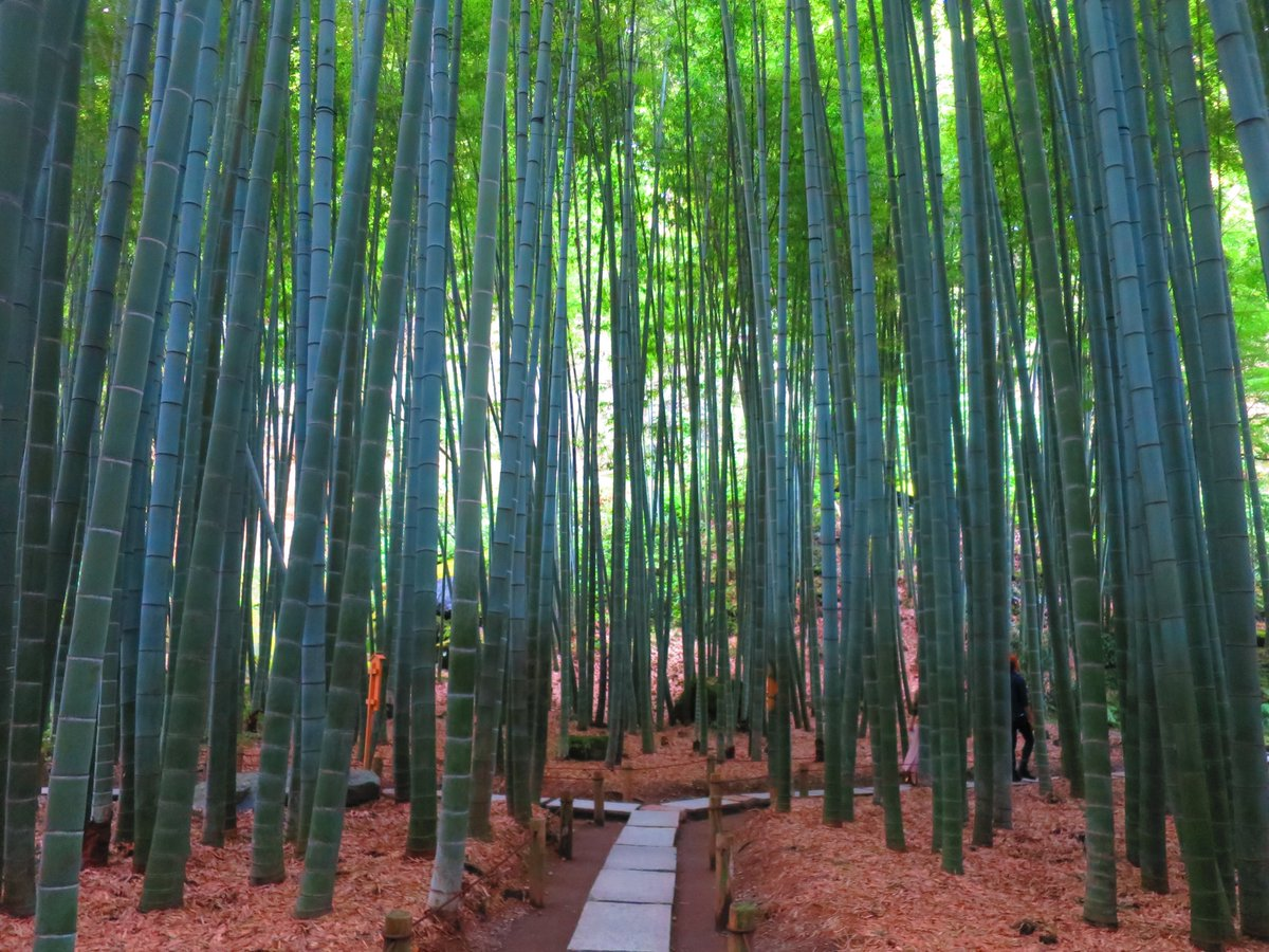 JapanBackpacker photo