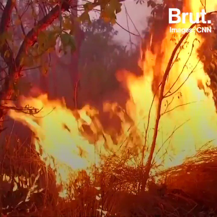 Pendant ce temps-là en Amazonie... Alors que de terribles incendies ravagent des hectares de forêt depuis plusieurs jours, de nombreux Brésiliens appellent à une prise de conscience mondiale avec le hashtag #PrayforAmazonas.
