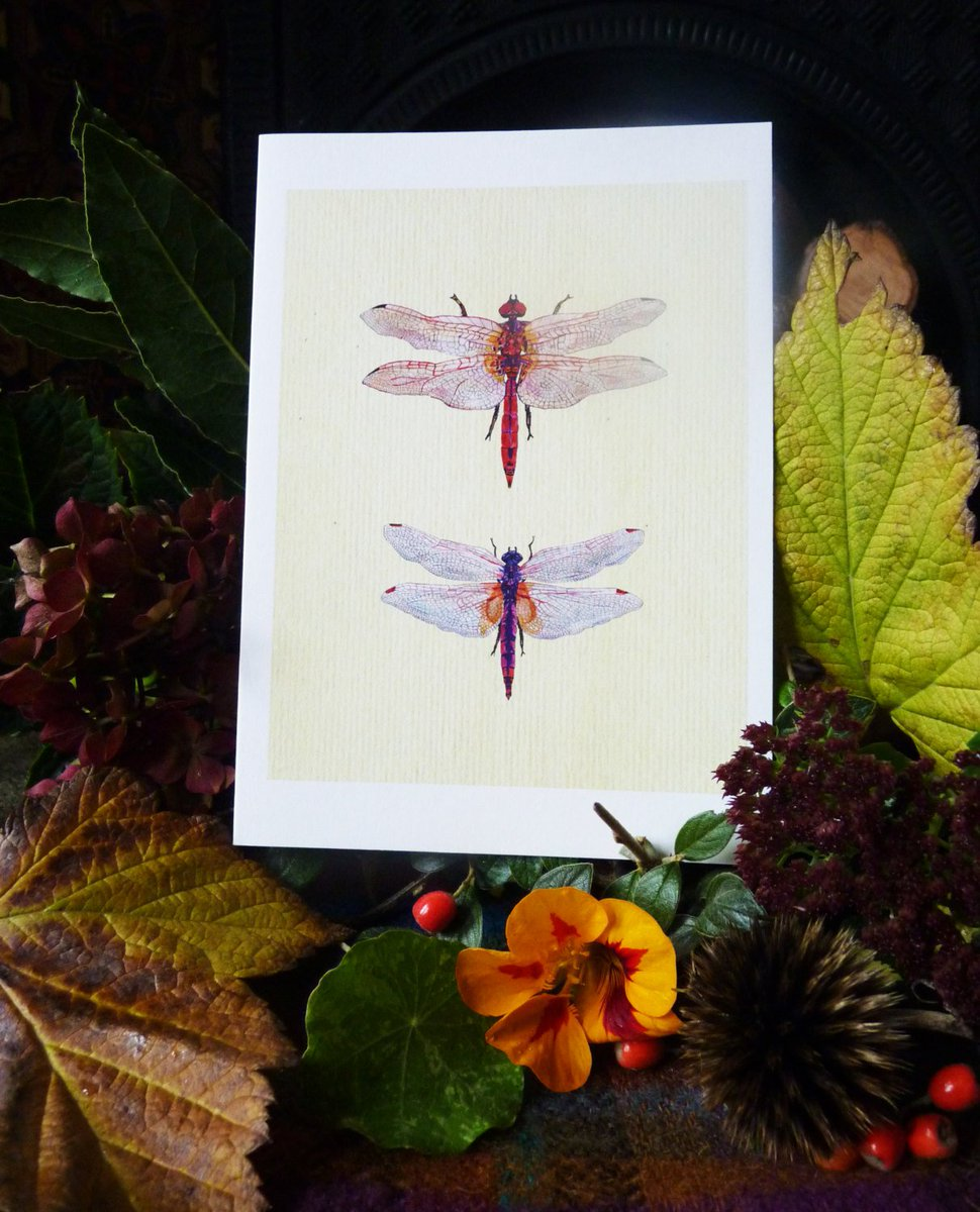 Dragonfly Card Father's Day Card Dragonfly Birthday Card Dragonfly Illustrative Card Blank Card Own Message Card - 7