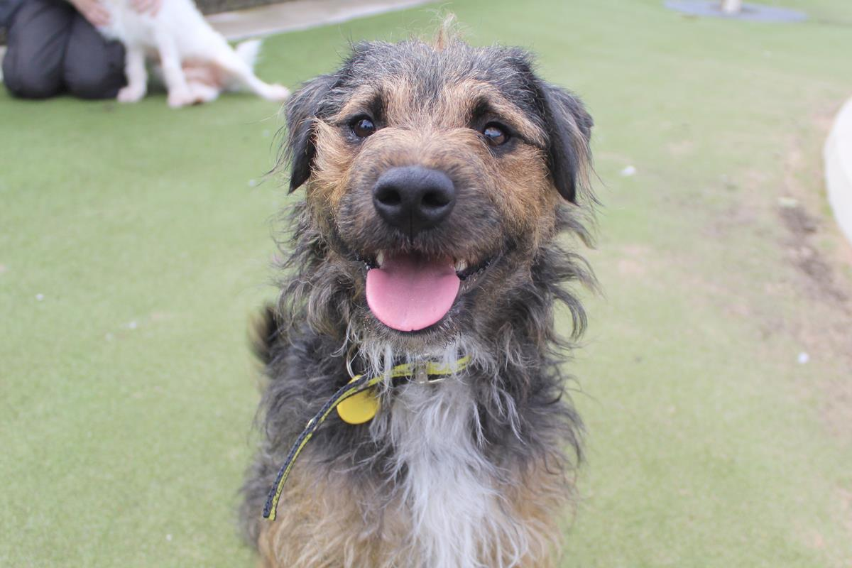 Could we have the pawfect opportunity for you? ⬇️ 🐾 Education and Community Officer, West Midlands (closes 26th August) 🐾 Vet Nurse, Harefield (closes 31st August) 🐾 Research Officer, Central London (closes 6th Sept) More vacancies ➡️ careers.dogstrust.org.uk 👍