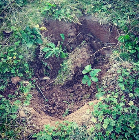 Terriermen are employed by Hunts to block Badger setts to prevent Foxes escaping. Badgers suffocate to death. These Hunts are licensed by the National Trust to use National Trust land. #FoxHunting #NTHuntsScandal https://t.co/NxV6UoPGyu @guardian