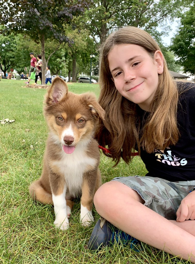 I pet Autumn. She is a 2 month old Australian Shepherd puppy. She is cuddly and smart. Her caregiver set up a pen with Autumn's crate in the center. Autumn used the crate door as a ladder and escaped. Autumn loves to play with her turkey. It gobbles as she runs with it.