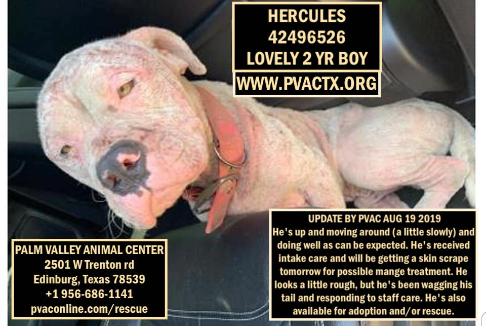 SUCCESS! @whitepeonyfarm is saving a life today! Hercules will be taken straight to get much needed medical care and into a foster home ASAP! THANKS 4 ALL YOUR HELP & SUPPORT! His new name will be #ROCKFORD  LOL ;-)   #DogBlessU<br>http://pic.twitter.com/QANF4ZM8aV