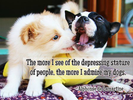 The more I see of the depressing stature of people, the more I admire my dogs.—Alphonse de Lamartine #quote <br>http://pic.twitter.com/WKCiiy0XOP