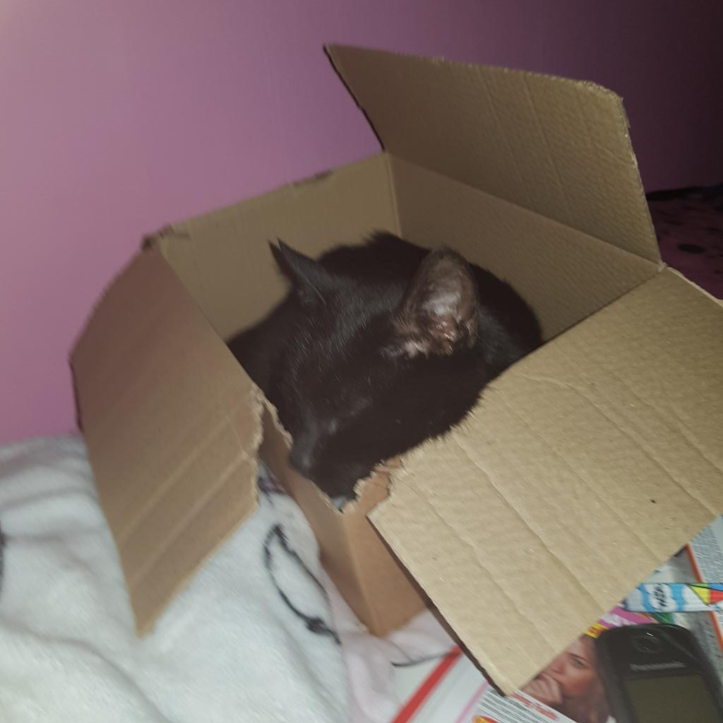 After a bit of shredding ive made a nice space to rest my chin  <br>http://pic.twitter.com/vSVMMy1nZ8