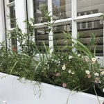 Image for the Tweet beginning: Planted today in Knightsbridge. All
