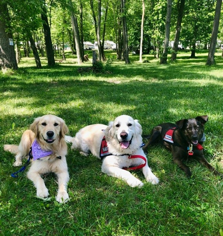 Meet your new best friends   Thanks to Go Team Therapy Dogs Detroit, we'll have therapy dogs at #TBH9 on Friday &amp; Saturday to help you relax and de-stress!  They can't wait to see you  Reg now:  http:// smash.gg/TBH9    <br>http://pic.twitter.com/5bedhfX7gu