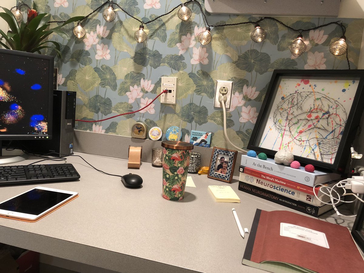 After spending two hours hanging (removable) wallpaper in my office I realized: I'm the Elle Woods of my lab. #NoShame #PostdocLife #LegallyBlondeGetsAPhD<br>http://pic.twitter.com/Ec6OII5lhu