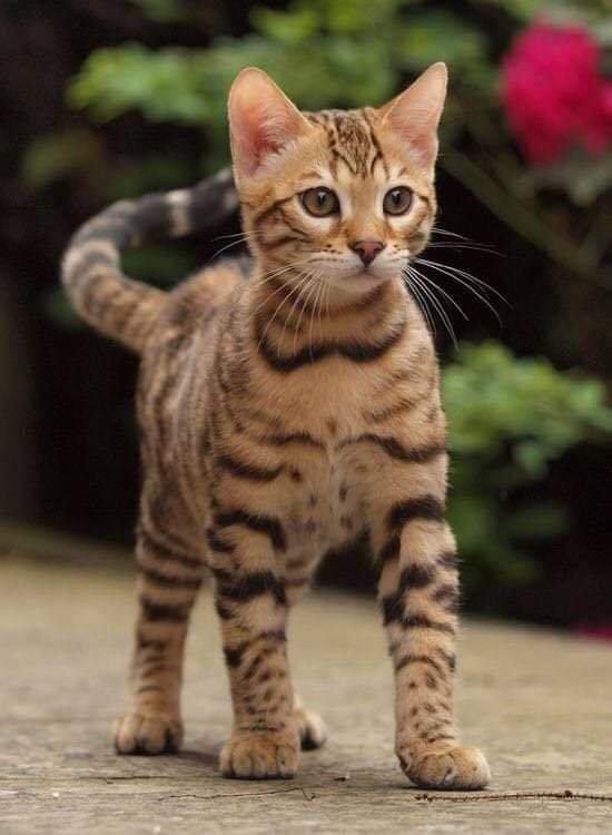 Good morning everyone. Good day for you. #goodmorning #goodsmile #flowerlove #CatsOfTwitter #CatsOnTwitter #catlover #SmileMore #BeHappy #BeKind<br>http://pic.twitter.com/EwvMsQoKEq