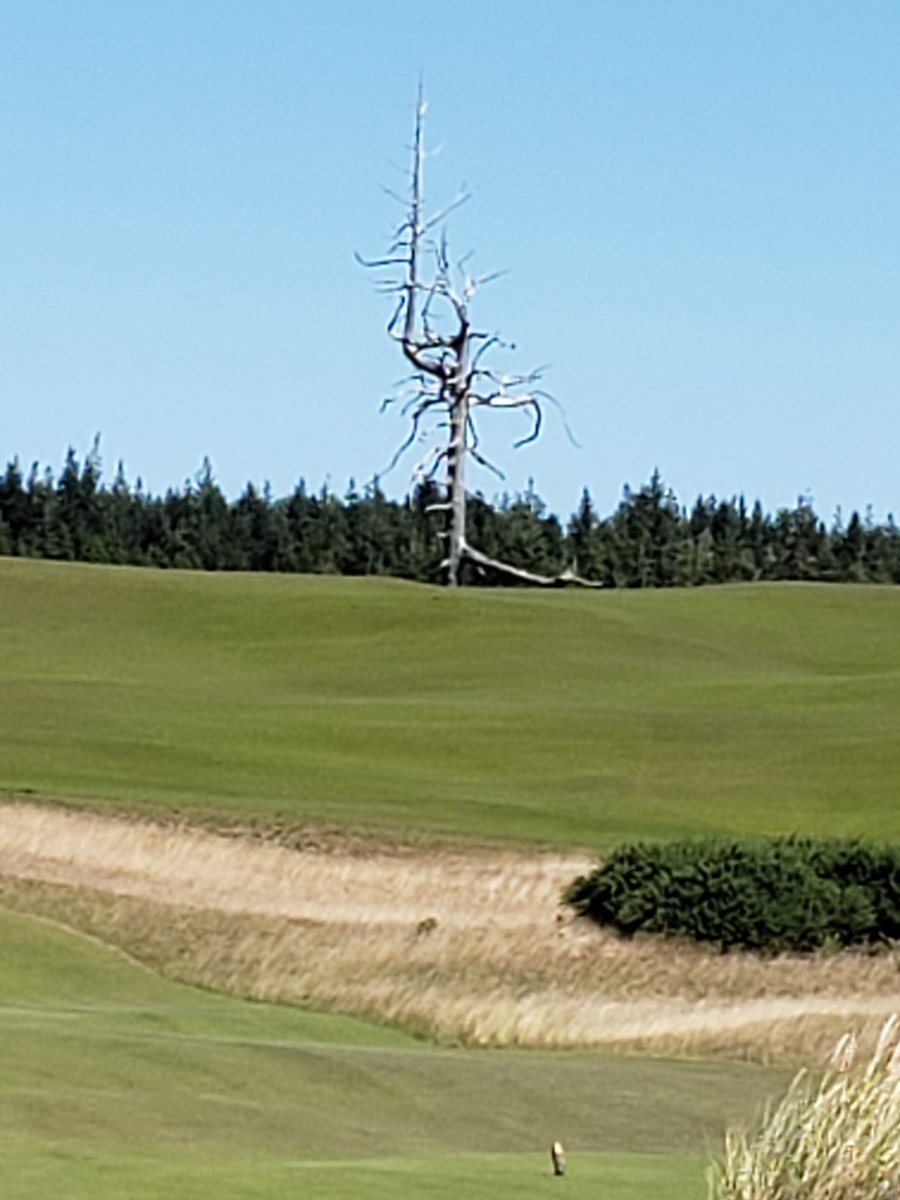 I used #shipsticks for the first time when I traveled to  #brandondunes last week, I highly recommend using them. Made my travel so much easier, but my golf game was not entirely prepared for the challenge of Bandon Dunes. A sacrifice to The Ghost Tree didnt help!!  <br>http://pic.twitter.com/foWEQkWdcU