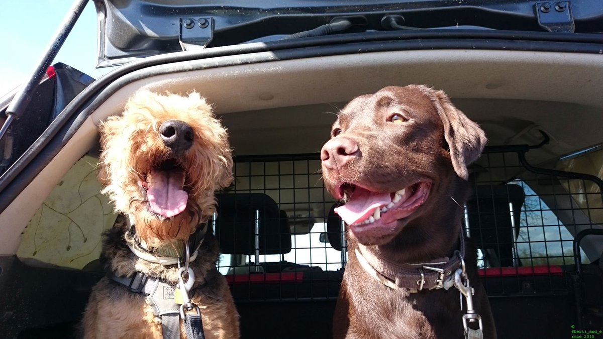 "The dog kind of way to say: ""Don't worry, be #happy! "" dogsarejoy<br>http://pic.twitter.com/8pOX1zHbQk"