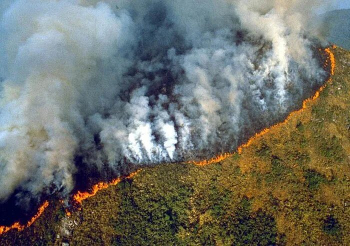 #AmazonFires are caused by politically motivated deforestation & are not a random disaster.  Either it happened intentionally to rid the last indigenous communities in the Amazon (genocide) or it happened to make way for cattle agriculture (profits>land).  My two cents? It's both <br>http://pic.twitter.com/ILSa6jcL2R