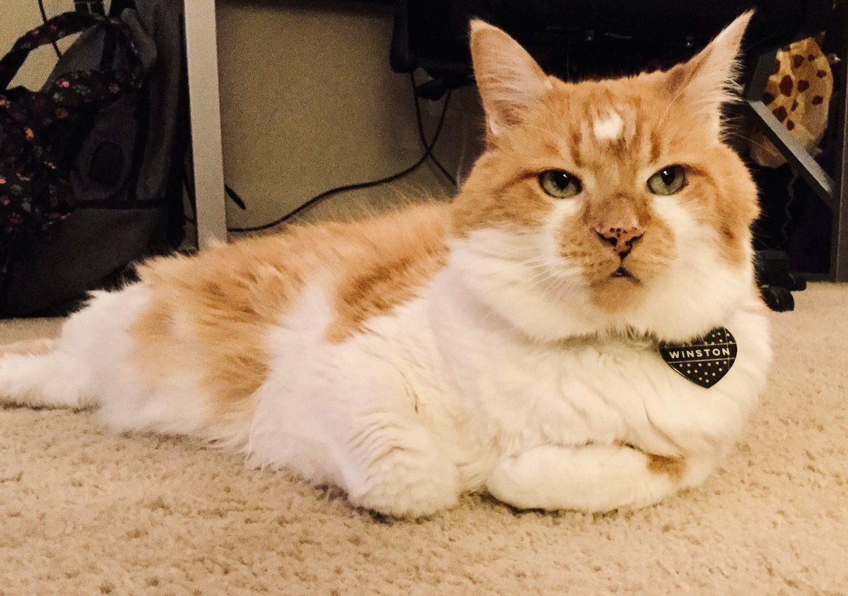 Missing treats? Winston says everyone is a suspect... #Skeptical #CatsofTwitter #FluffyFursday #catlife <br>http://pic.twitter.com/4fEpIh0zs3